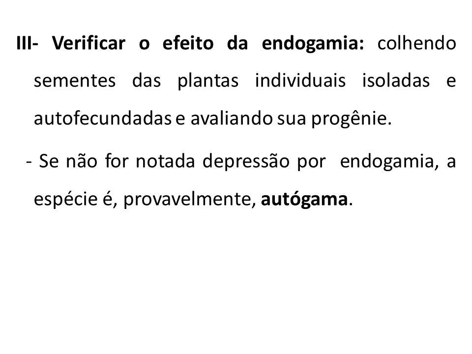 III- Verificar o efeito da endogamia: colhendo sementes das plantas individuais isoladas e autofecundadas e avaliando sua progênie. - Se não for notad