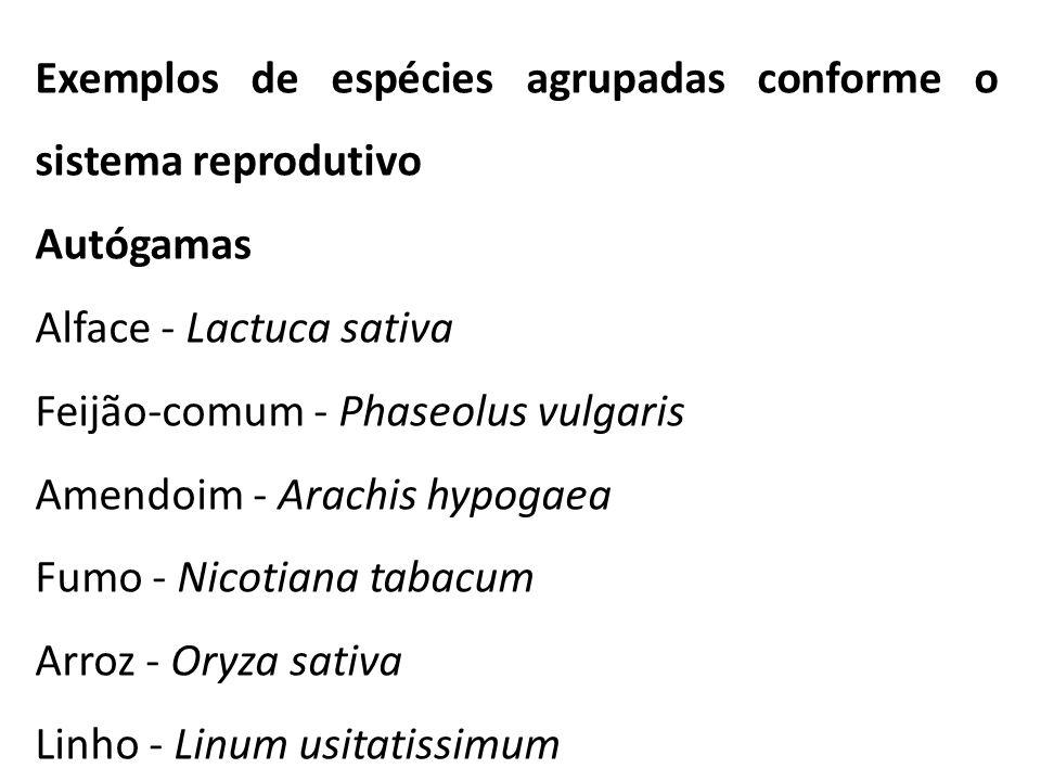 Exemplos de espécies agrupadas conforme o sistema reprodutivo Autógamas Alface - Lactuca sativa Feijão-comum - Phaseolus vulgaris Amendoim - Arachis h