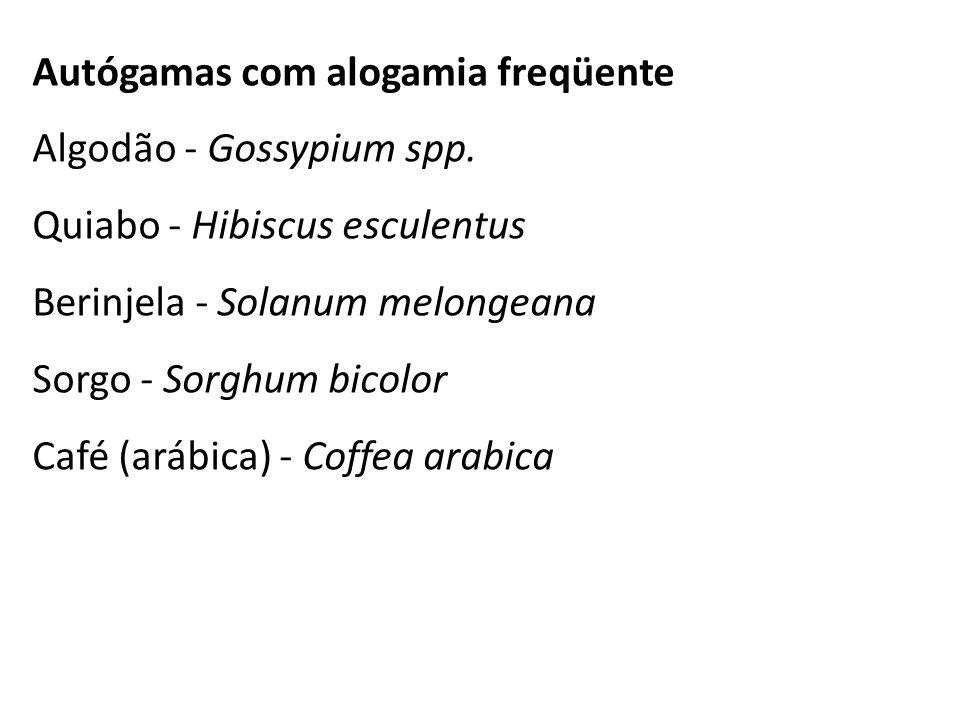 Autógamas com alogamia freqüente Algodão - Gossypium spp. Quiabo - Hibiscus esculentus Berinjela - Solanum melongeana Sorgo - Sorghum bicolor Café (ar