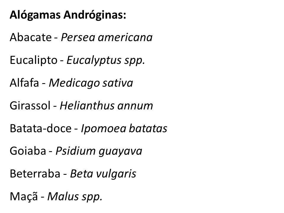 Alógamas Andróginas: Abacate - Persea americana Eucalipto - Eucalyptus spp. Alfafa - Medicago sativa Girassol - Helianthus annum Batata-doce - Ipomoea