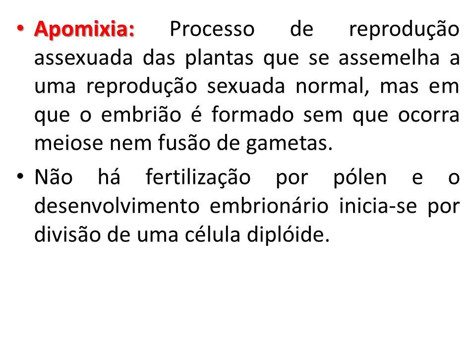 Apomixia: Apomixia: Processo de reprodução assexuada das plantas que se assemelha a uma reprodução sexuada normal, mas em que o embrião é formado sem