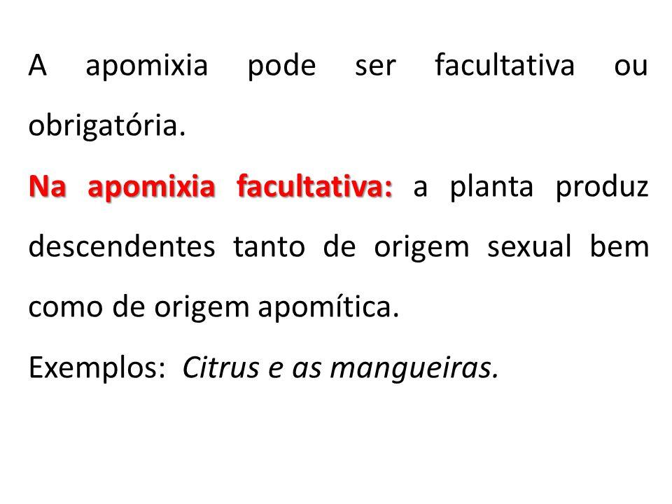 A apomixia pode ser facultativa ou obrigatória. Na apomixia facultativa: Na apomixia facultativa: a planta produz descendentes tanto de origem sexual