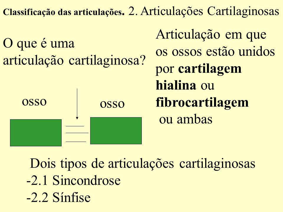Articulação em que os ossos estão unidos por cartilagem hialina ou fibrocartilagem ou ambas osso Classificação das articulações.