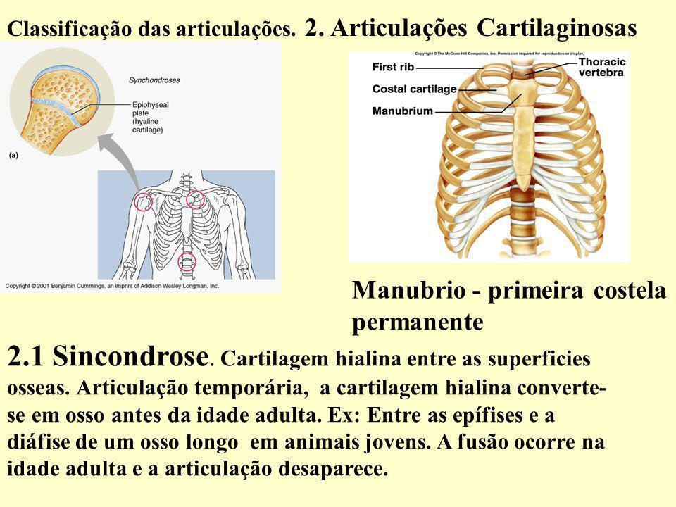 2.1 Sincondrose.Cartilagem hialina entre as superficies osseas.