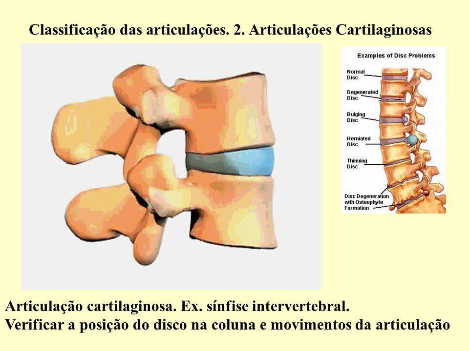 Classificação das articulações.2. Articulações Cartilaginosas Articulação cartilaginosa.