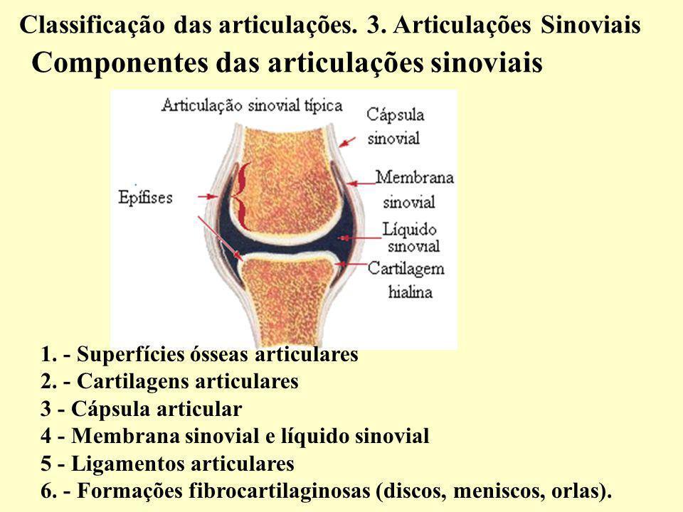 1.- Superfícies ósseas articulares 2.