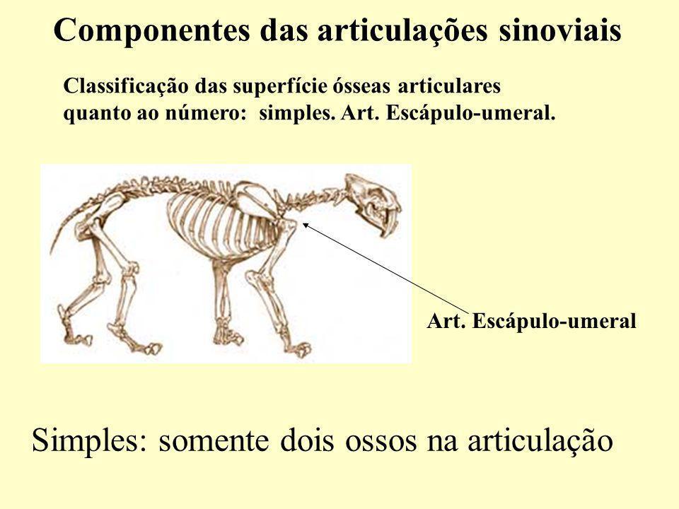 Classificação das superfície ósseas articulares quanto ao número: simples.