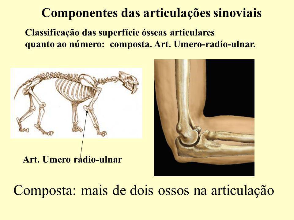 Componentes das articulações sinoviais Classificação das superfície ósseas articulares quanto ao número: composta.