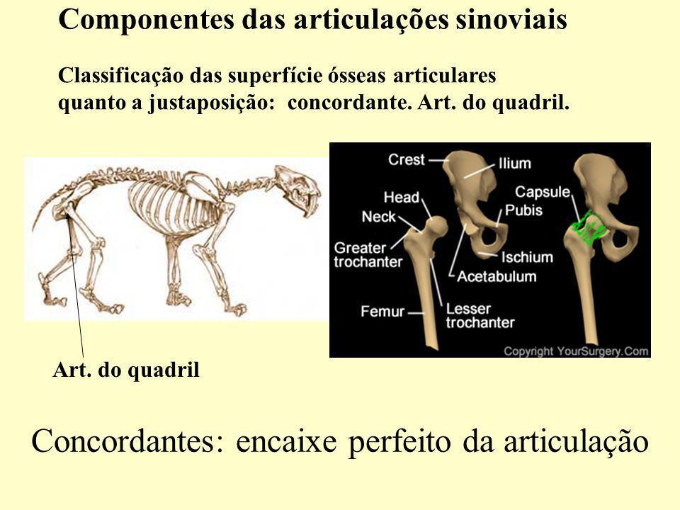 Classificação das superfície ósseas articulares quanto a justaposição: concordante.