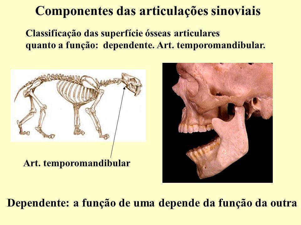 Componentes das articulações sinoviais Classificação das superfície ósseas articulares quanto a função: dependente.