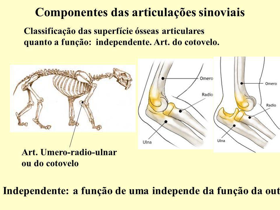Componentes das articulações sinoviais Classificação das superfície ósseas articulares quanto a função: independente.
