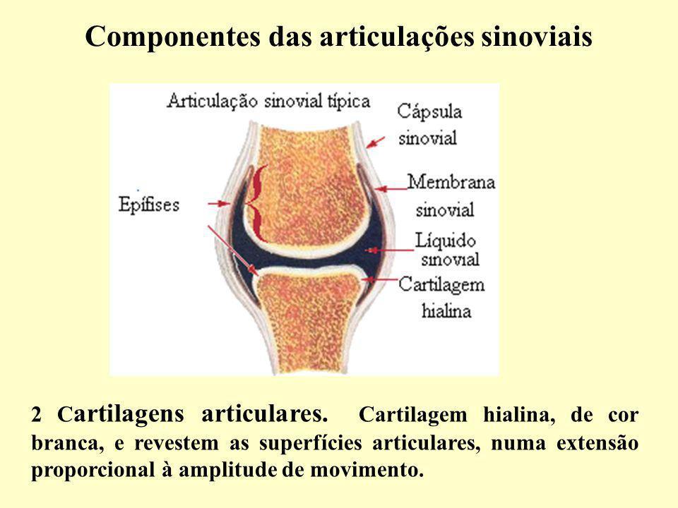 Componentes das articulações sinoviais 2 C artilagens articulares.