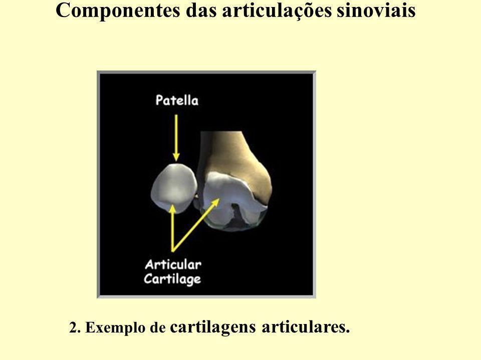 Componentes das articulações sinoviais 2. Exemplo de cartilagens articulares.