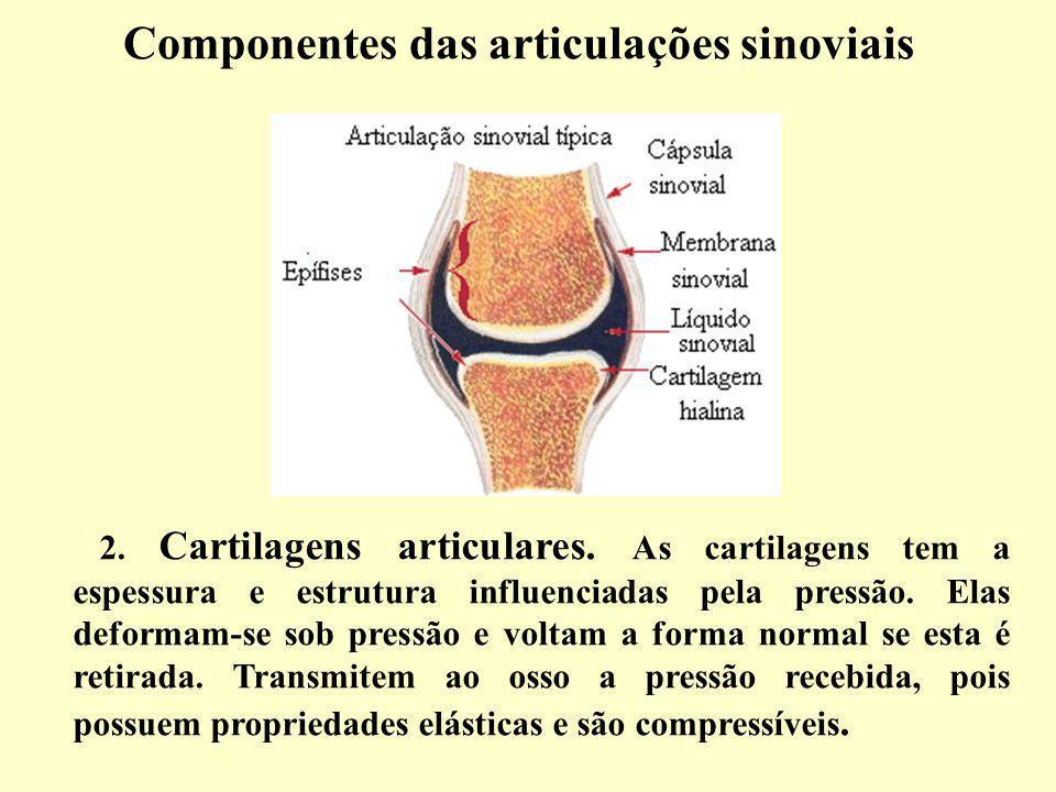 Componentes das articulações sinoviais 2.Cartilagens articulares.