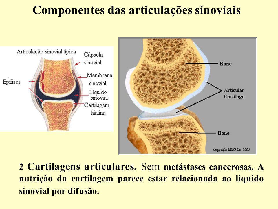 2 Cartilagens articulares.Sem metástases cancerosas.