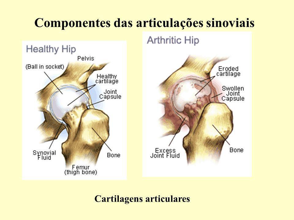 Cartilagens articulares