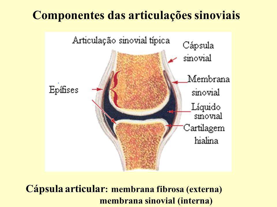 Componentes das articulações sinoviais Cápsula articular : membrana fibrosa (externa) membrana sinovial (interna)