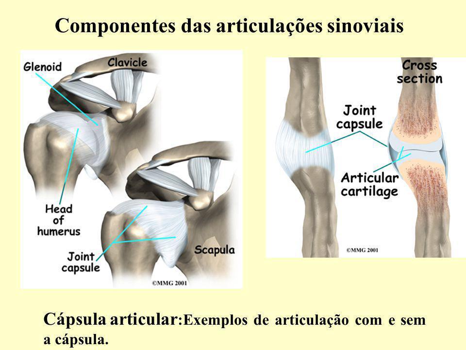 Componentes das articulações sinoviais Cápsula articular :Exemplos de articulação com e sem a cápsula.