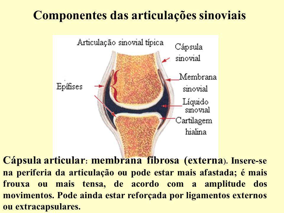 Componentes das articulações sinoviais Cápsula articular : membrana fibrosa (externa ).