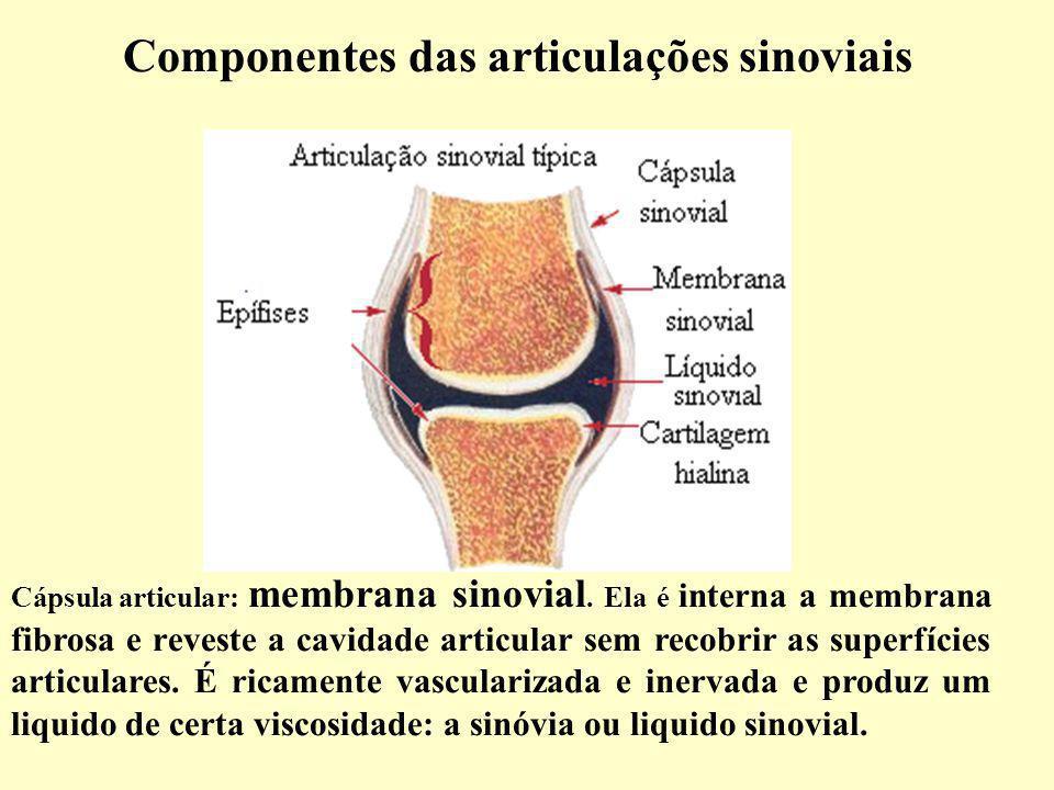 Componentes das articulações sinoviais Cápsula articular: membrana sinovial.