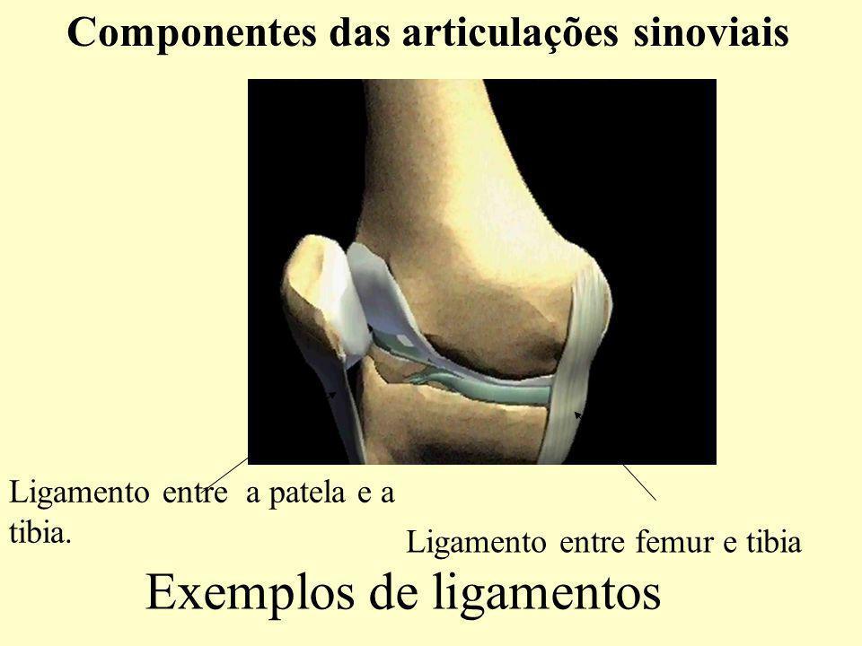 Exemplos de ligamentos Componentes das articulações sinoviais Ligamento entre a patela e a tibia.