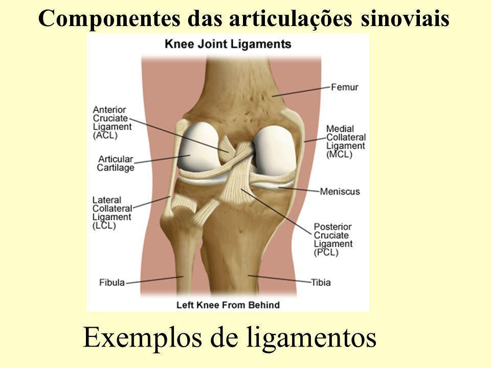 Exemplos de ligamentos Componentes das articulações sinoviais