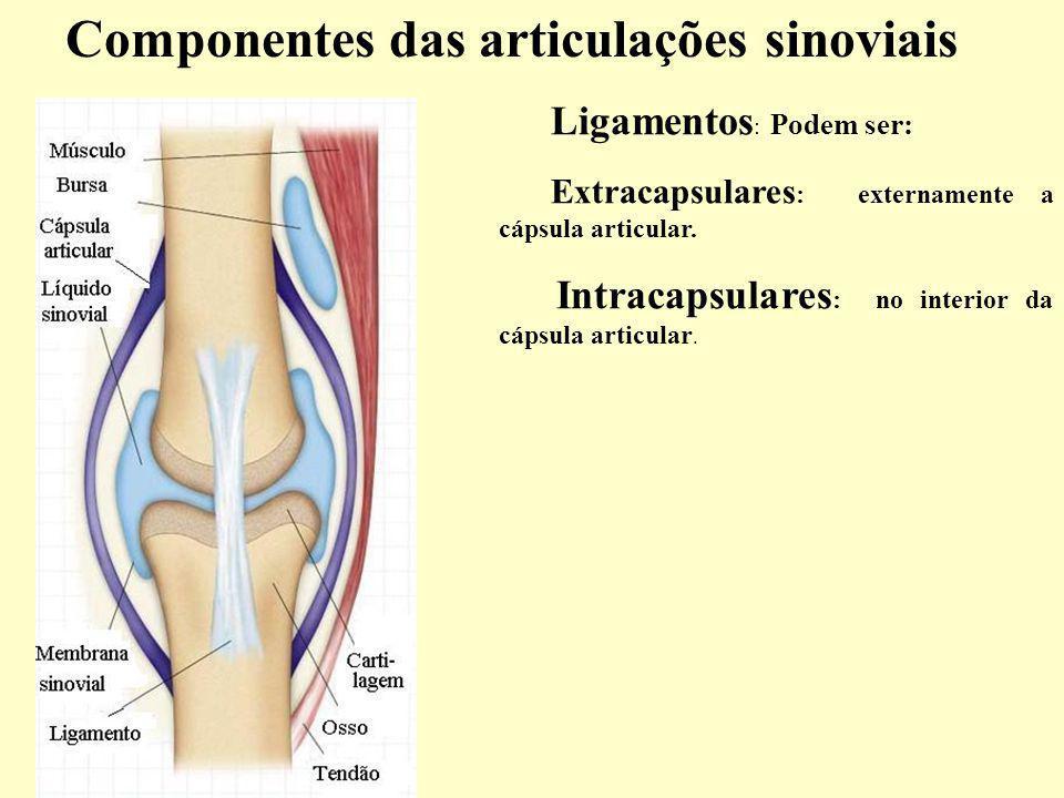 Ligamentos : Podem ser: Extracapsulares : externamente a cápsula articular.