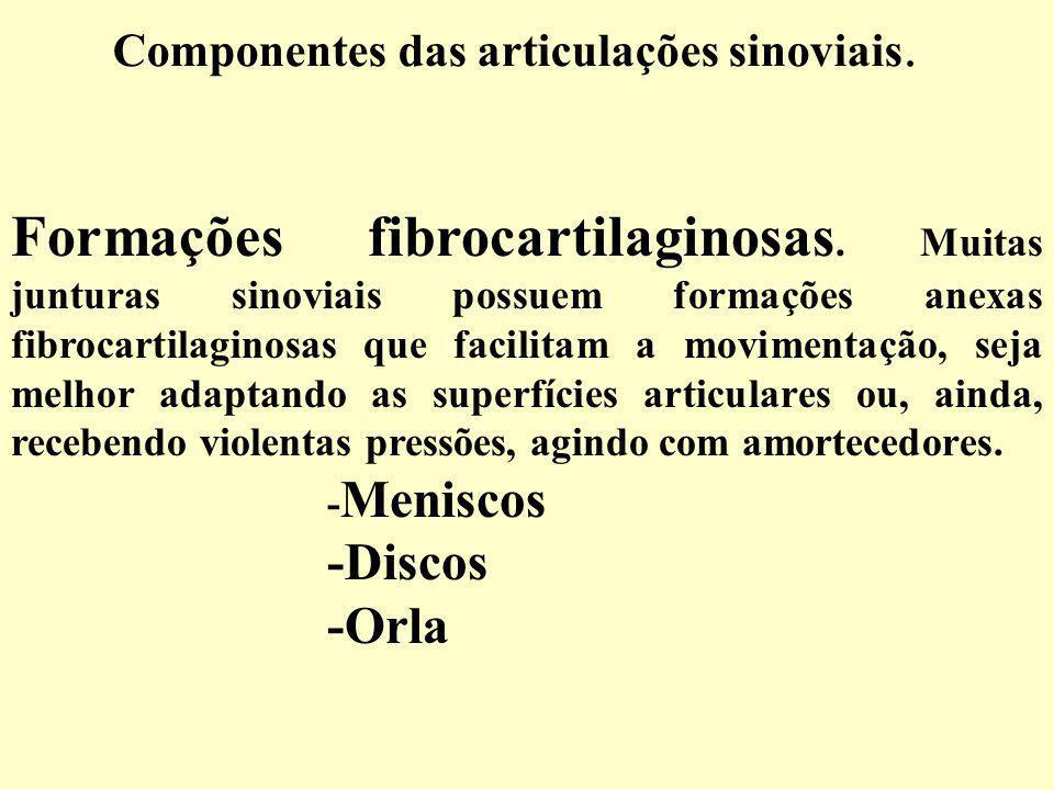 Componentes das articulações sinoviais.Formações fibrocartilaginosas.