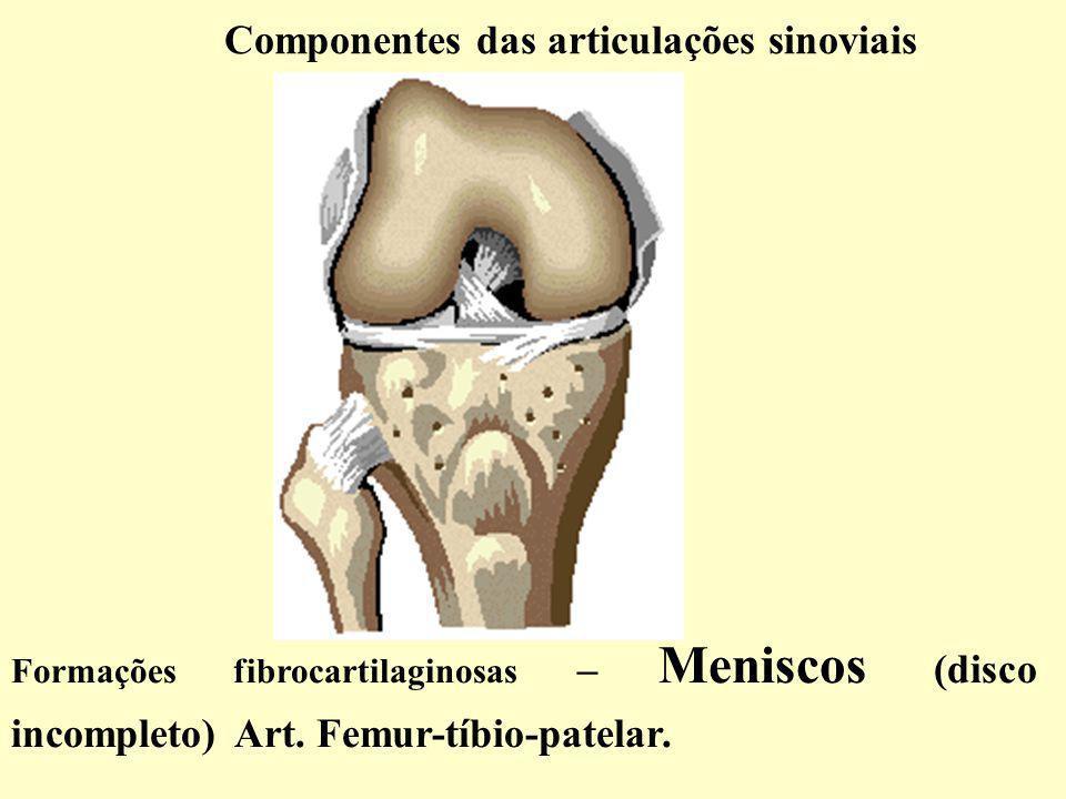 Componentes das articulações sinoviais Formações fibrocartilaginosas – Meniscos (disco incompleto) Art.