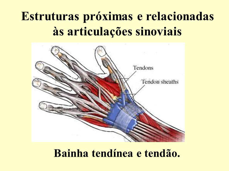 Estruturas próximas e relacionadas às articulações sinoviais Bainha tendínea e tendão.