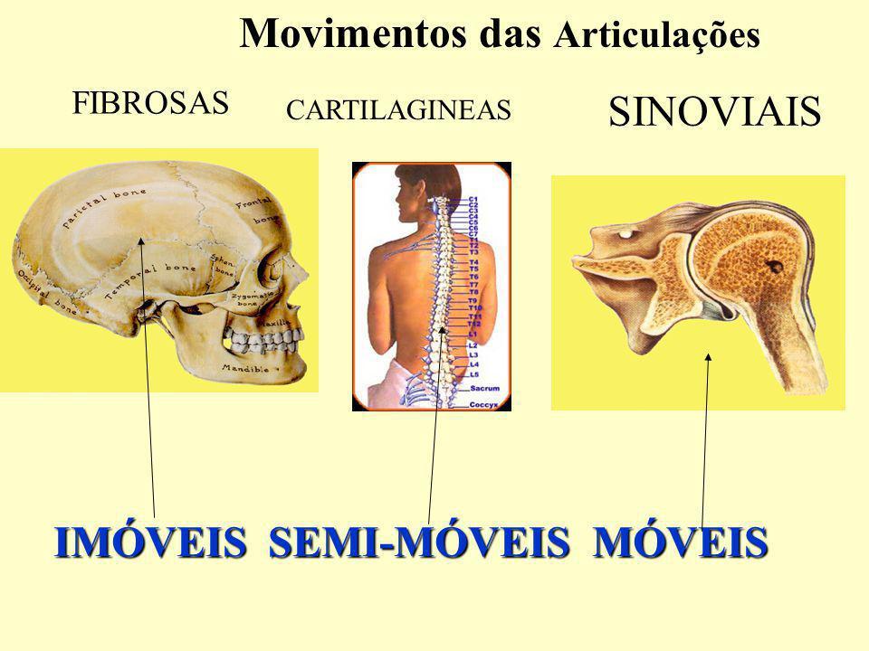 Movimentos das Articulações IMÓVEIS SEMI-MÓVEIS MÓVEIS FIBROSAS CARTILAGINEAS SINOVIAIS