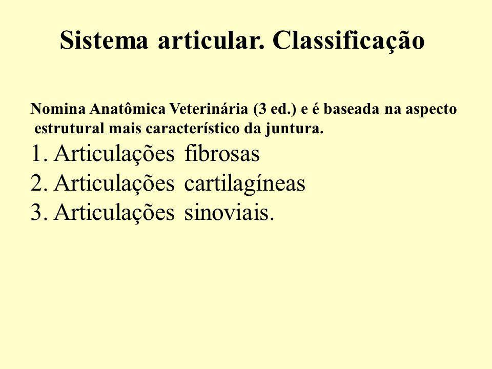 Sistema articular.