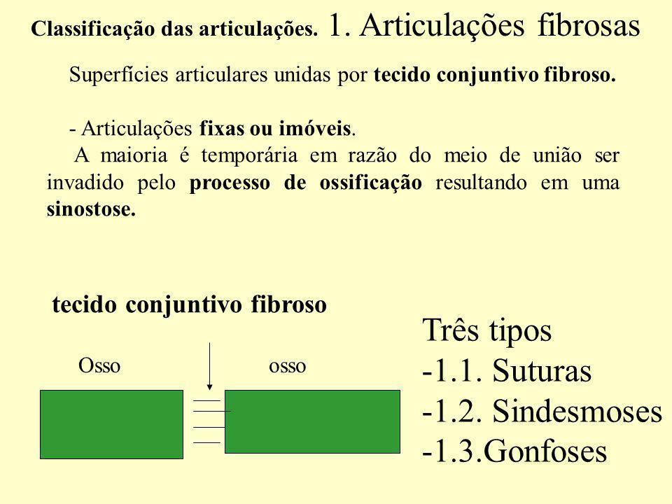 Superfícies articulares unidas por tecido conjuntivo fibroso.