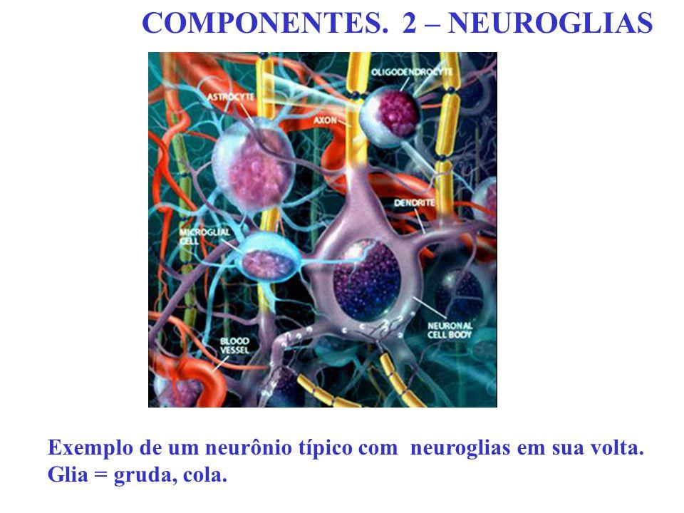COMPONENTES. 2 – NEUROGLIAS Exemplo de um neurônio típico com neuroglias em sua volta. Glia = gruda, cola.