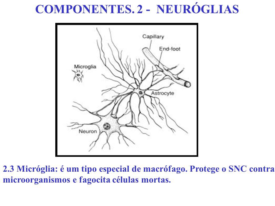 COMPONENTES. 2 - NEURÓGLIAS 2.3 Micróglia: é um tipo especial de macrófago. Protege o SNC contra microorganismos e fagocita células mortas.
