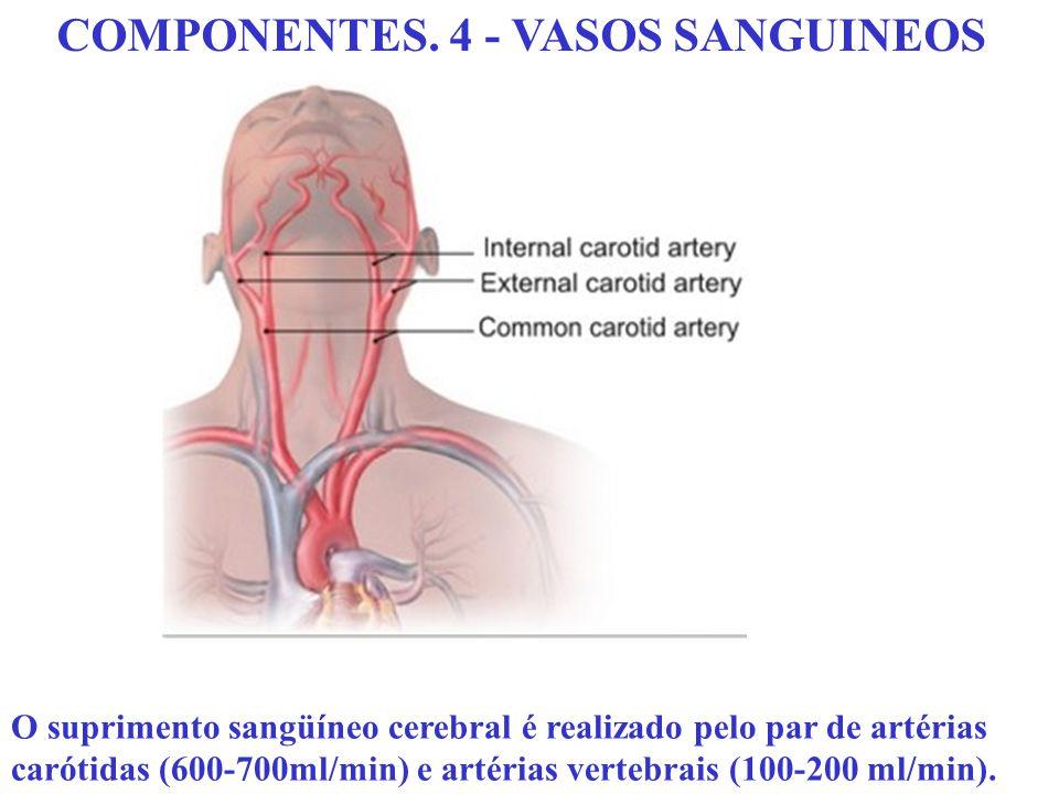 COMPONENTES. 4 - VASOS SANGUINEOS O suprimento sangüíneo cerebral é realizado pelo par de artérias carótidas (600-700ml/min) e artérias vertebrais (10