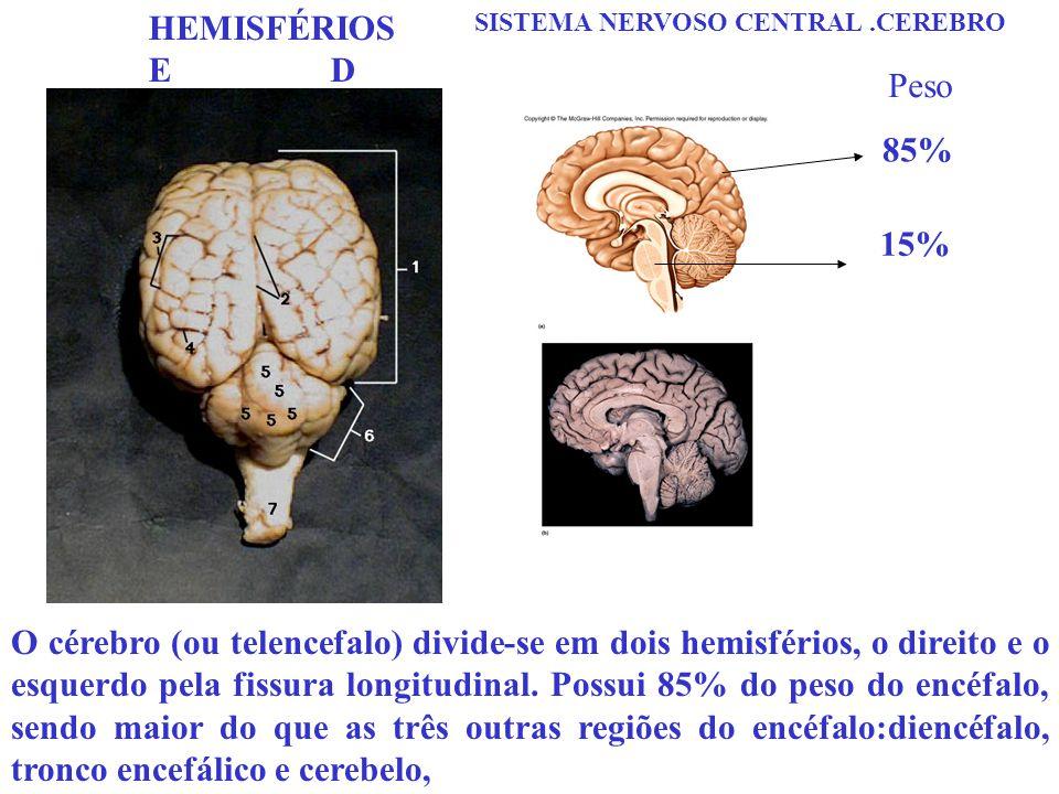 SISTEMA NERVOSO CENTRAL.CEREBRO O cérebro (ou telencefalo) divide-se em dois hemisférios, o direito e o esquerdo pela fissura longitudinal. Possui 85%