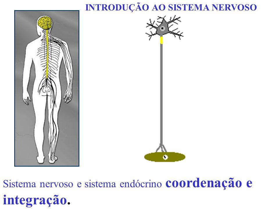 Sistema nervoso e sistema endócrino coordenação e integração. INTRODUÇÃO AO SISTEMA NERVOSO