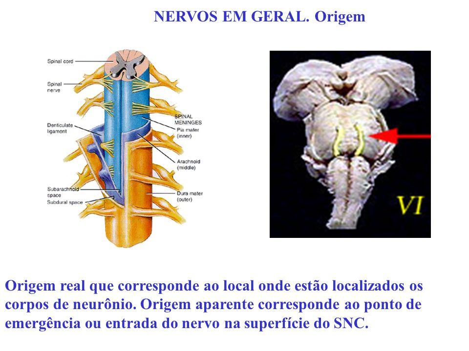 NERVOS EM GERAL. Origem Origem real que corresponde ao local onde estão localizados os corpos de neurônio. Origem aparente corresponde ao ponto de eme