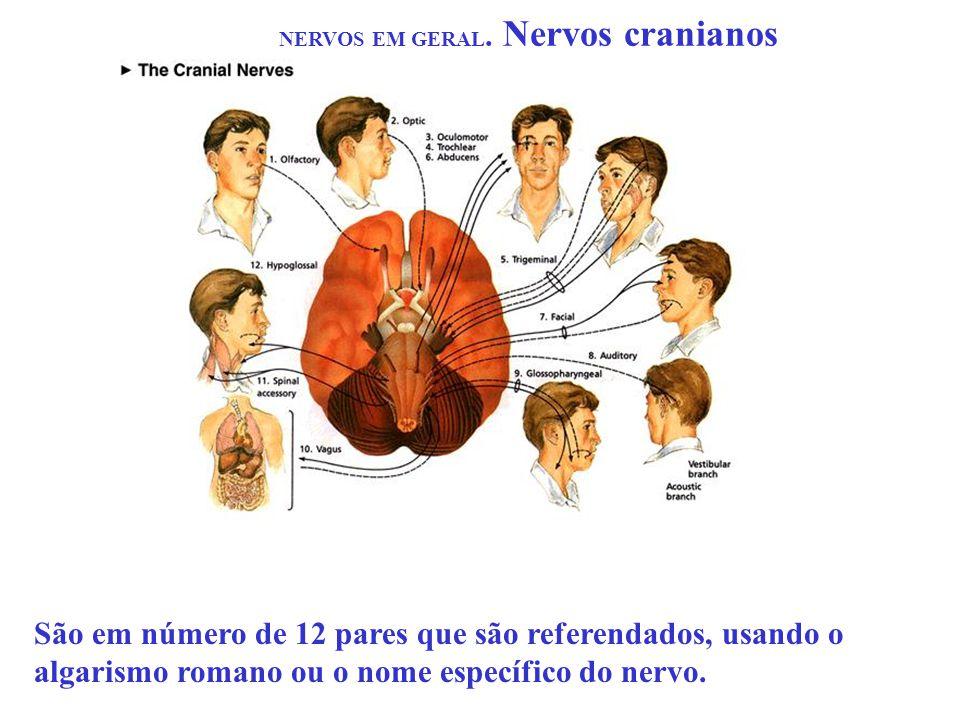 NERVOS EM GERAL. Nervos cranianos São em número de 12 pares que são referendados, usando o algarismo romano ou o nome específico do nervo.