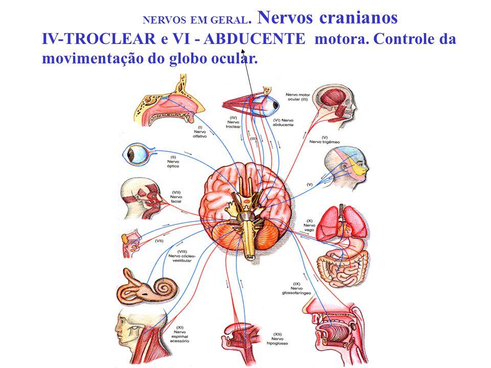 NERVOS EM GERAL. Nervos cranianos IV-TROCLEAR e VI - ABDUCENTE motora. Controle da movimentação do globo ocular.