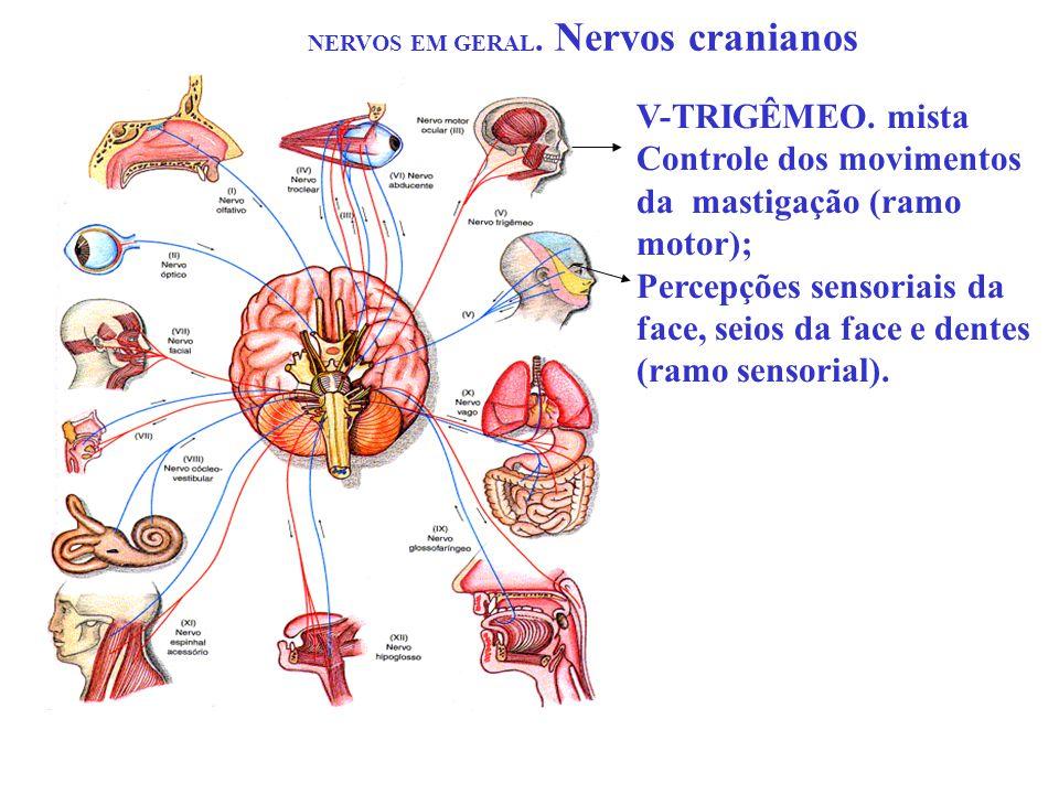 NERVOS EM GERAL. Nervos cranianos V-TRIGÊMEO. mista Controle dos movimentos da mastigação (ramo motor); Percepções sensoriais da face, seios da face e