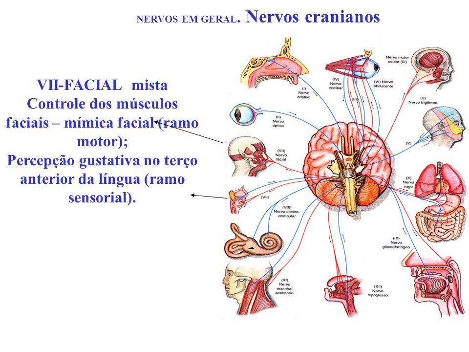 NERVOS EM GERAL. Nervos cranianos VII-FACIAL mista Controle dos músculos faciais – mímica facial (ramo motor); Percepção gustativa no terço anterior d