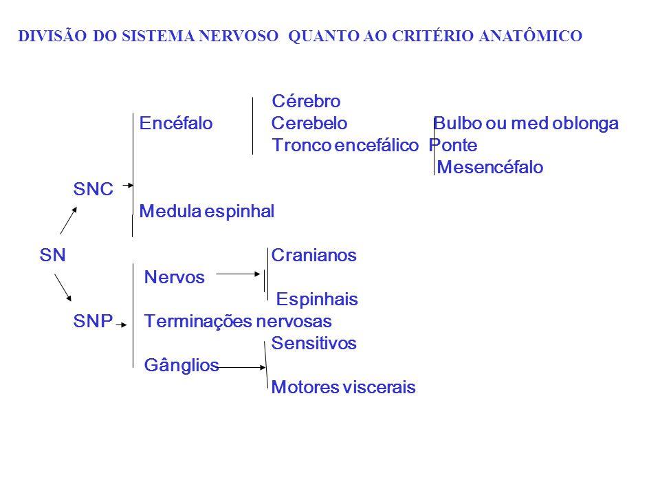 Cérebro EncéfaloCerebelo Bulbo ou med oblonga Tronco encefálico Ponte Mesencéfalo SNC Medula espinhal SN Cranianos Nervos Espinhais SNP Terminações ne