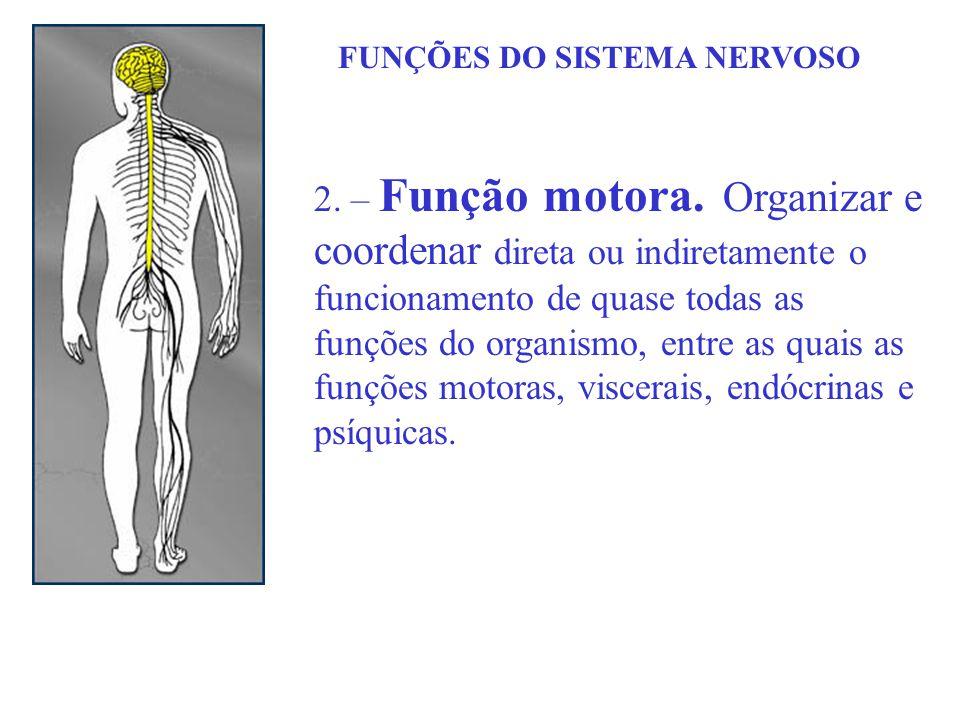 FUNÇÕES DO SISTEMA NERVOSO 2. – Função motora. Organizar e coordenar direta ou indiretamente o funcionamento de quase todas as funções do organismo, e