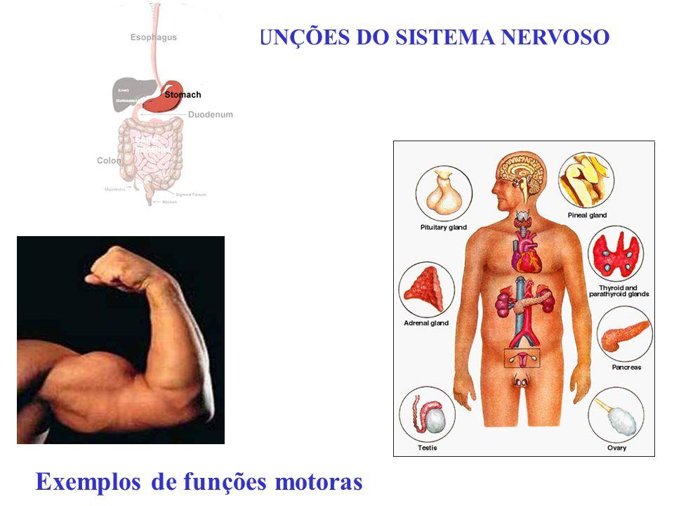 FUNÇÕES DO SISTEMA NERVOSO Exemplos de funções motoras