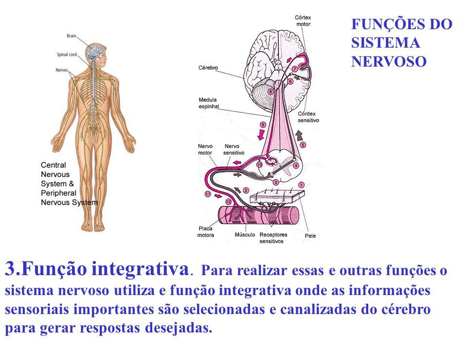 FUNÇÕES DO SISTEMA NERVOSO 3.Função integrativa. Para realizar essas e outras funções o sistema nervoso utiliza e função integrativa onde as informaçõ