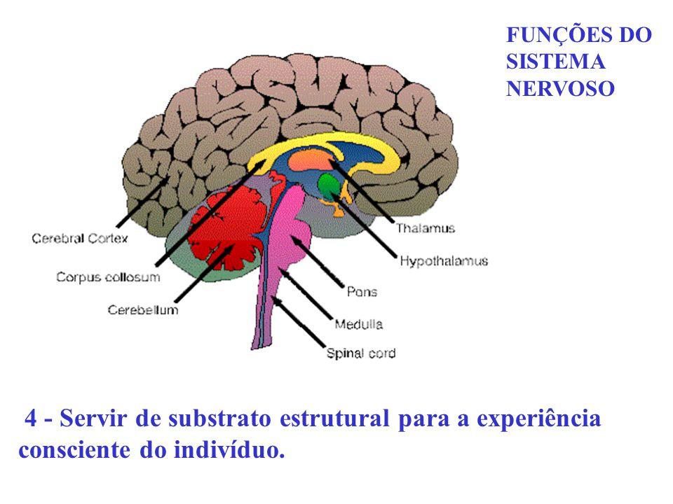 FUNÇÕES DO SISTEMA NERVOSO 4 - Servir de substrato estrutural para a experiência consciente do indivíduo.