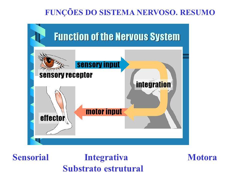 FUNÇÕES DO SISTEMA NERVOSO. RESUMO Sensorial Integrativa Motora Substrato estrutural