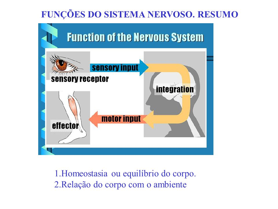 FUNÇÕES DO SISTEMA NERVOSO. RESUMO 1.Homeostasia ou equilíbrio do corpo. 2.Relação do corpo com o ambiente